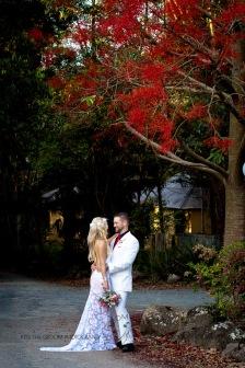 cedar creek lodges trina steve wedding kiss the groom mt tamborine wedding photographer-0635